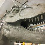 t-rex making